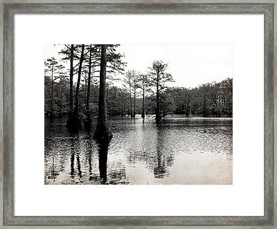 Cypress Trees In Louisiana Framed Print by Ester  Rogers