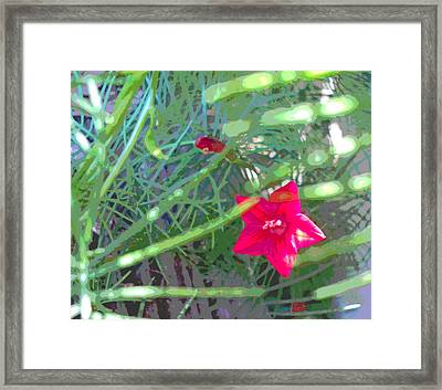 Cypress Vine With Foliage Framed Print by Padre Art
