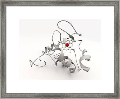 Cytochrome C Framed Print by Phantatomix