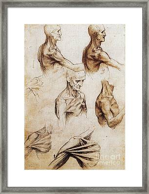 Da Vinci Anatomical Drawings Framed Print by Science Source