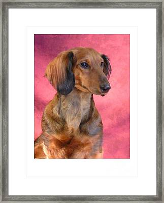 Dachshund 472 Framed Print by Larry Matthews