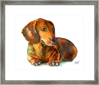 Dachshund Puppy Framed Print by Christy  Freeman