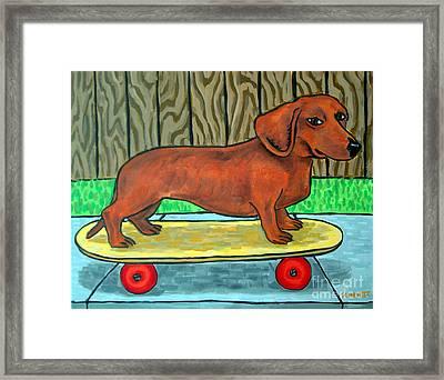Dachshund Skateboarding Framed Print by Jay  Schmetz