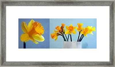 Daffodils Framed Print by Cathie Tyler