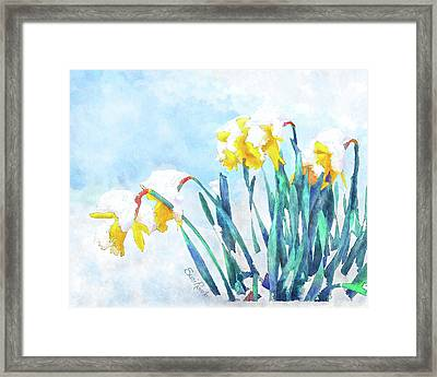 Daffodils With Bad Timing Framed Print by Suni Roveto
