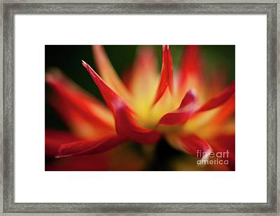 Dahlia Feuer Framed Print by Mike Reid