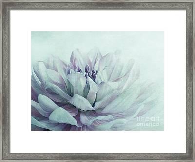 Dahlia Framed Print by Priska Wettstein