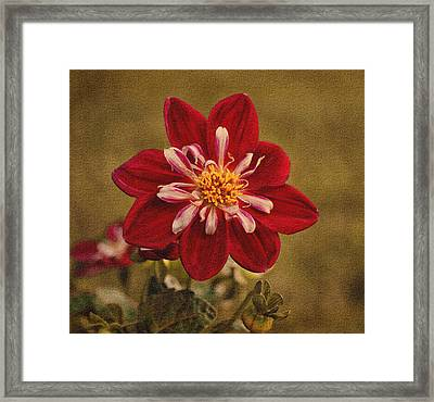 Dahlia Framed Print by Sandy Keeton