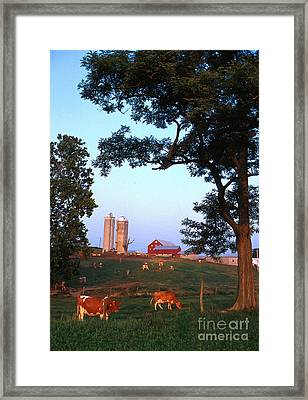 Dairy Farm Framed Print by Photo Researchers