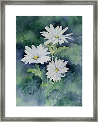 Daisies II Framed Print by Sam Sidders