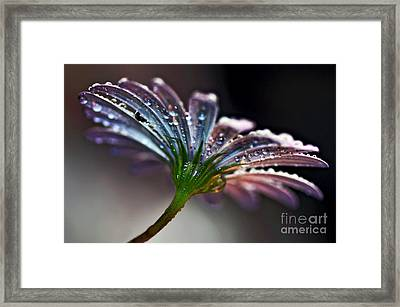 Daisy Abstract With Droplets Framed Print by Kaye Menner