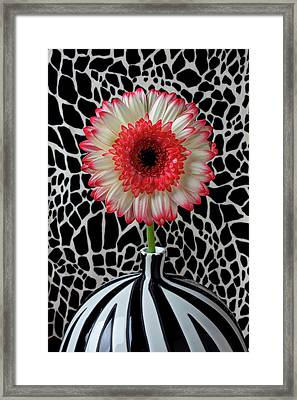 Daisy And Graphic Vase Framed Print by Garry Gay