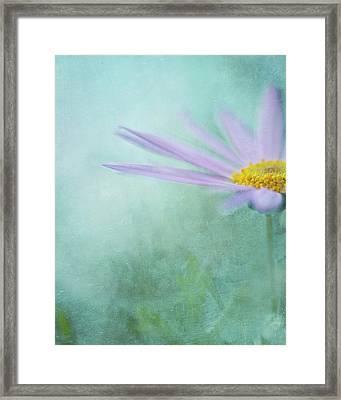 Daisy In Mist Framed Print by Sharon Lapkin