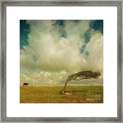 Daisy Spots A Tree Framed Print by Paul Grand