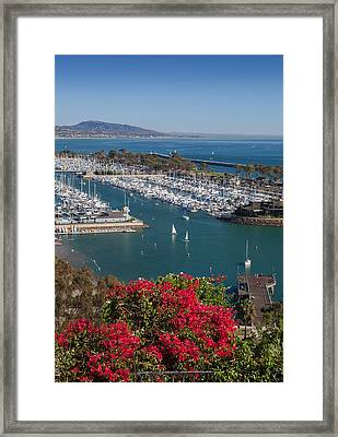 Dana Point Harbor Framed Print by Cliff Wassmann