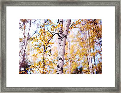 Dancing Birches Framed Print by Jenny Rainbow