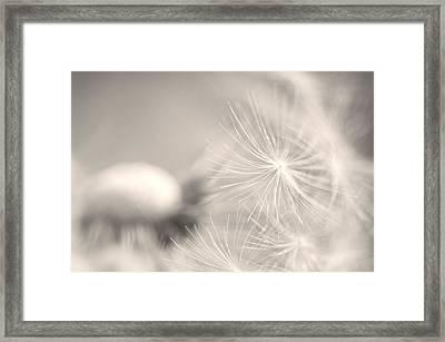 Dandelion Flower Framed Print by Ceca Photography
