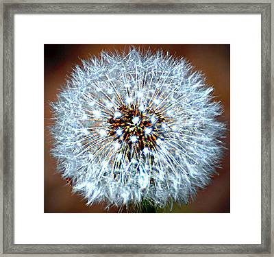 Dandelion Seed Framed Print by Marty Koch