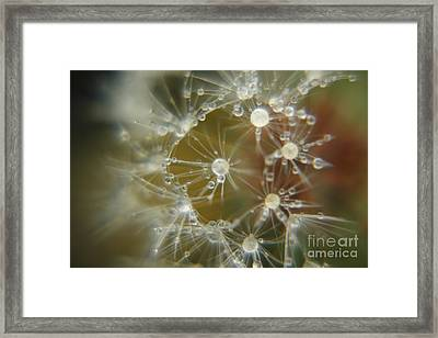 Dandelion Seeds Framed Print by Yumi Johnson