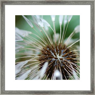 Dandelion Tears Framed Print by Paul Ward