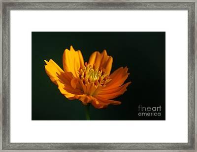 Dappled In The Morning Light Framed Print by Darren Fisher