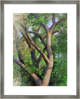 Dappled Woods Framed Print by Anna Rose Bain