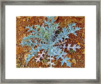 Dare Devil Framed Print by Peter P G