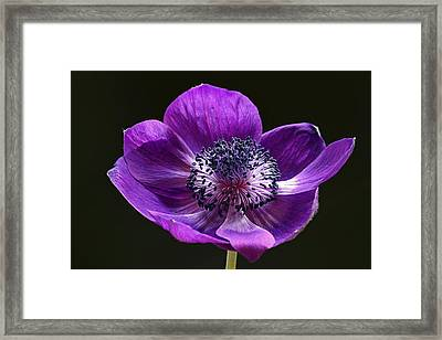 Daughter Of The Wind Framed Print by Juergen Roth