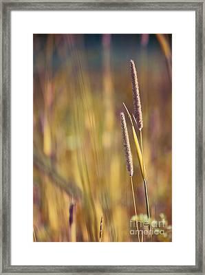 Day Whisperings Framed Print by Aimelle