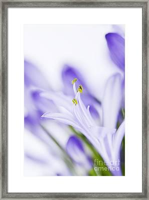 Daydreamer Framed Print by Kim Fearheiley