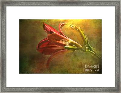 Daylily Photoart With Texture II  Framed Print by Debbie Portwood