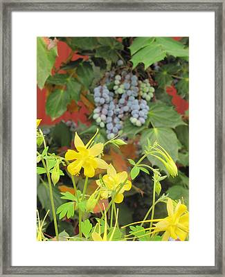 Days Of Wine And Roses Framed Print by Shawn Hughes