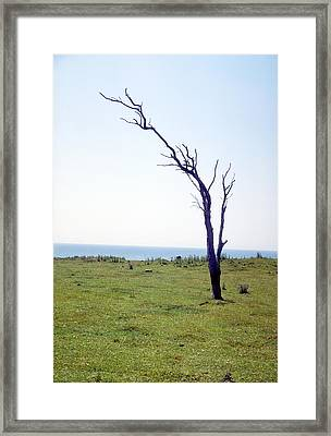 Dead Tree Framed Print by Victor De Schwanberg