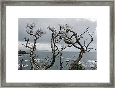 Dead  Trees Framed Print by Yurix Sardinelly