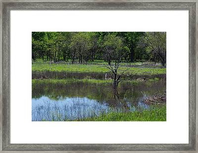 Deadwood Reflections Framed Print by Robyn Stacey