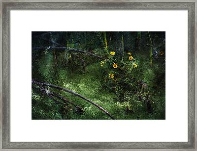 Deep Into Nature Framed Print by Bonnie Bruno