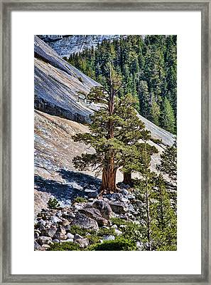 Deep Roots Framed Print by Bonnie Bruno