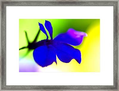 Deeply Blue Framed Print by Marie Jamieson