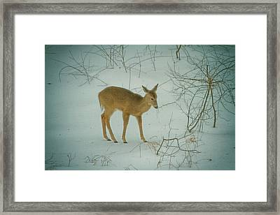 Deer Winter Framed Print by Karol Livote