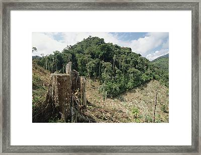 Deforested Hillside Of Wet Montane Framed Print by Gerry Ellis