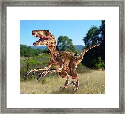 Deinonychus Dinosaur Framed Print by Roger Harris