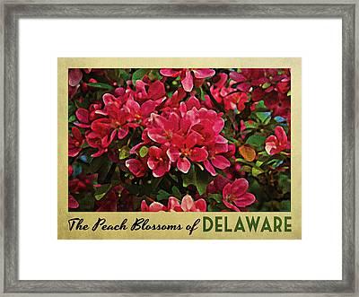 Delaware Peach Blossoms Framed Print by Flo Karp