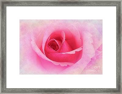 Delicate Framed Print by Judi Bagwell