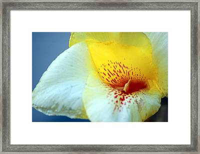 Delicate Framed Print by Leigh Meredith