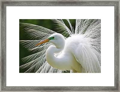 Delicate Framed Print by Paulette Thomas