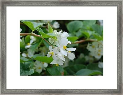 Delicate White Flower Framed Print by Jennifer Ancker