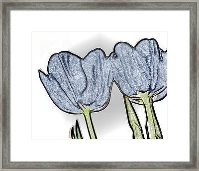 Denim Tulips Framed Print by Cheryl Young
