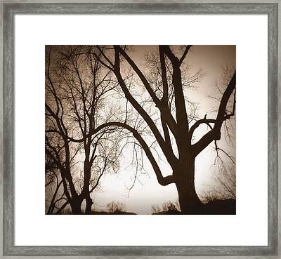 Desepiants Framed Print by Dan Stone