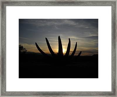 Desert Bloom Framed Print by Aj Willams