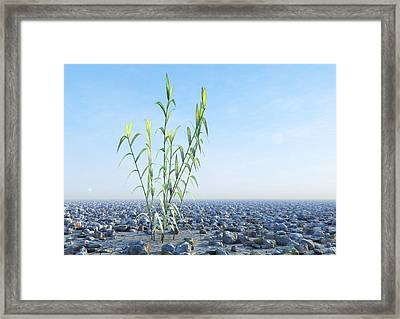 Desert Plant, Artwork Framed Print by Carl Goodman